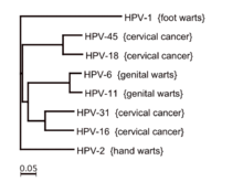 hpv virus cervical smear warts foot nails