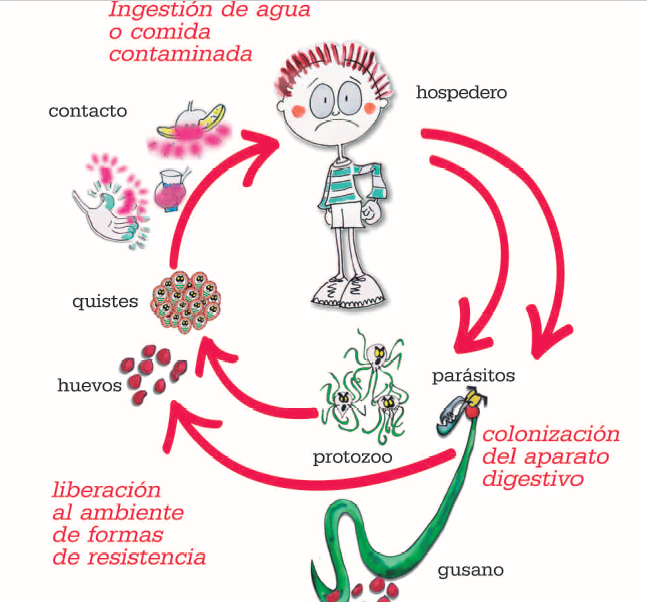 parasitos oxiuros sintomas