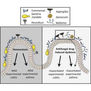 helmintiaze sintomi per papilloma virus