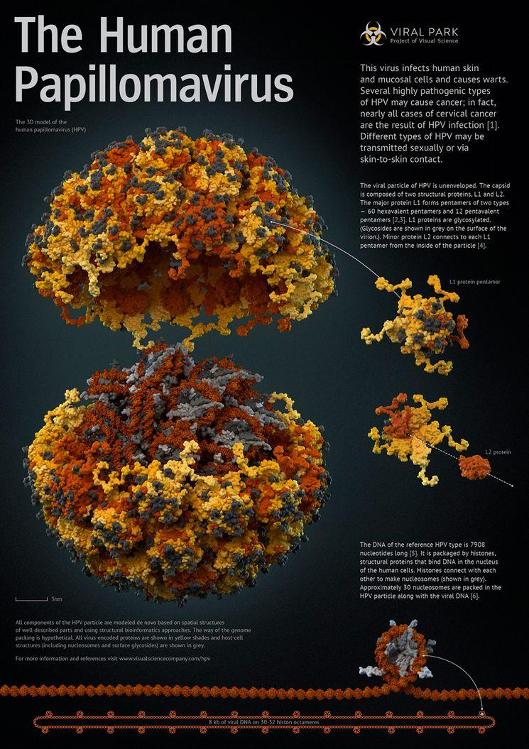 papilloma humana