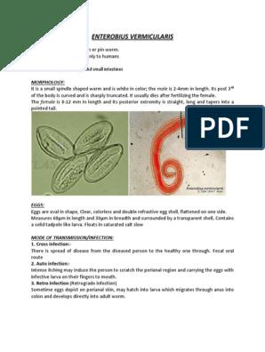 enterobiasis mode of transmission paraziti hemoroizi