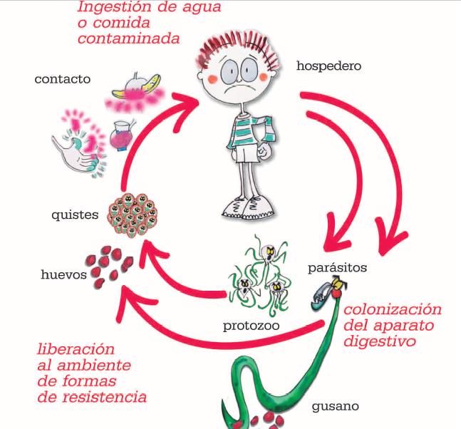 complicaciones de oxiuros cancerul si vitaminele b