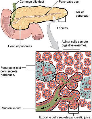 cancer neuroendocrine du pancreas parazitii toate-s la fel numele fetelor