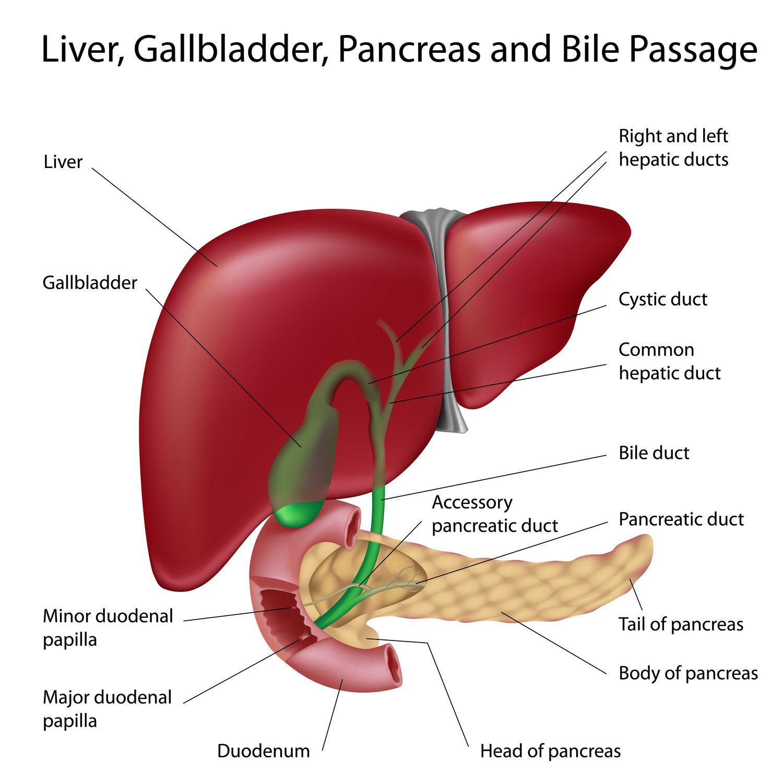 cancer de colon metastaze ficat cancer plamani tuse