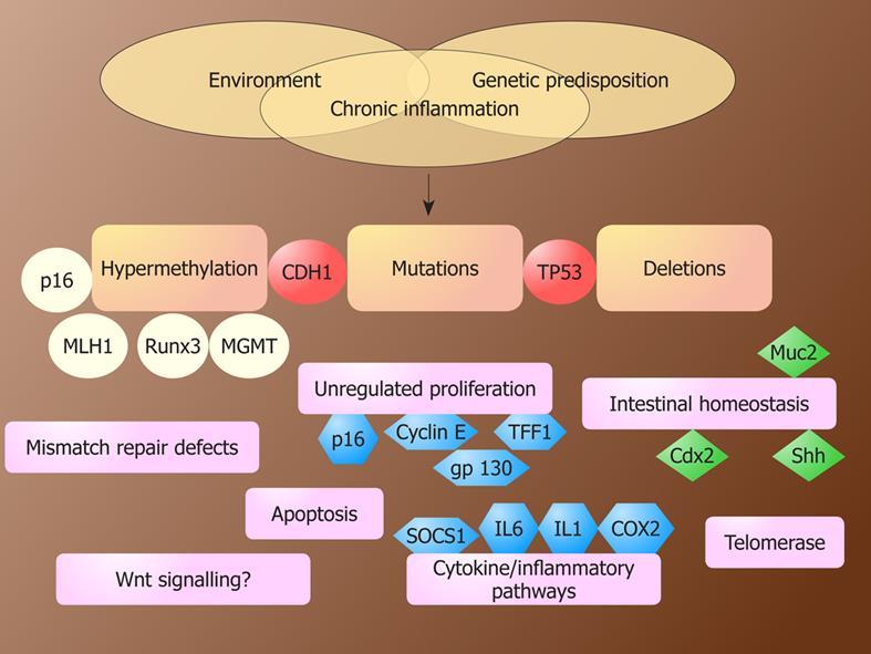 gastric cancer genetics