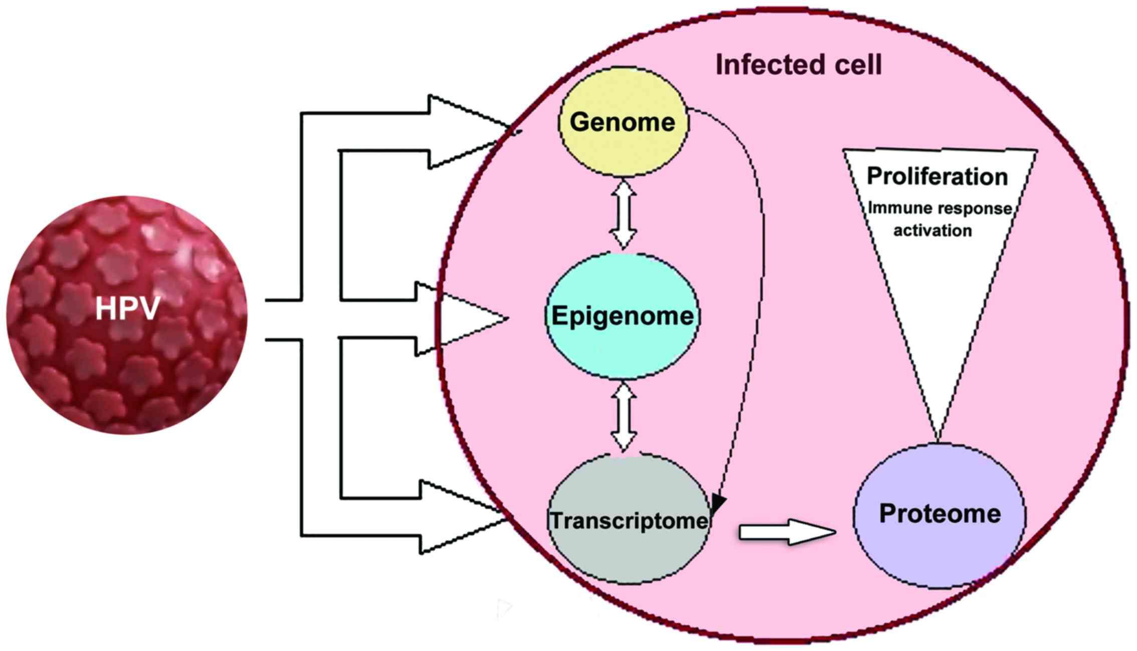 human papilloma virus in neonates metastatic cancer jaw