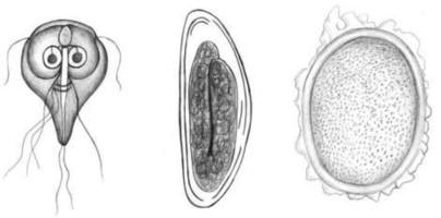 gejala klinis papilloma que es virus del papiloma humano (vph)