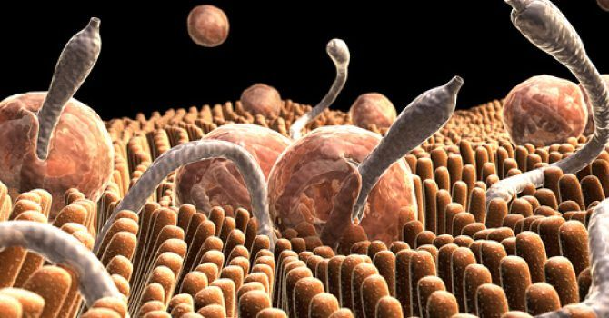 cancerul ficatului simptome