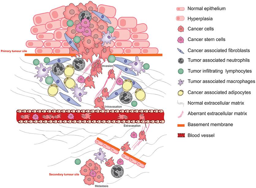 benign cancer stem cells