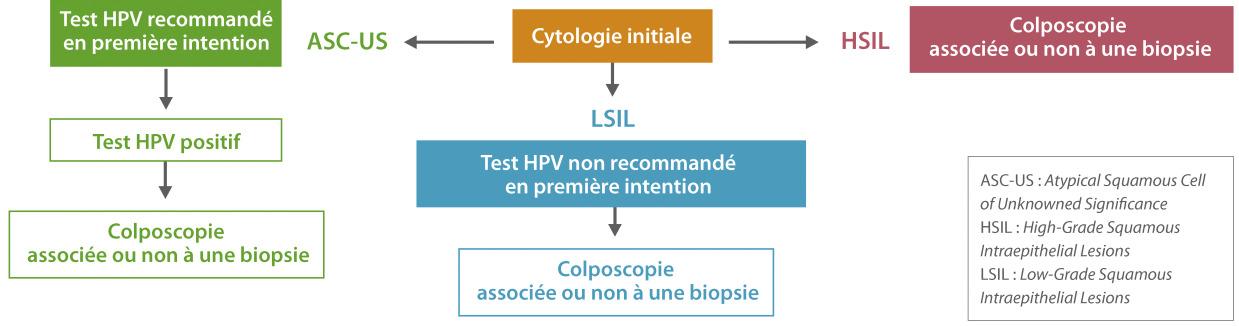 papillomavirus humain recherches associees