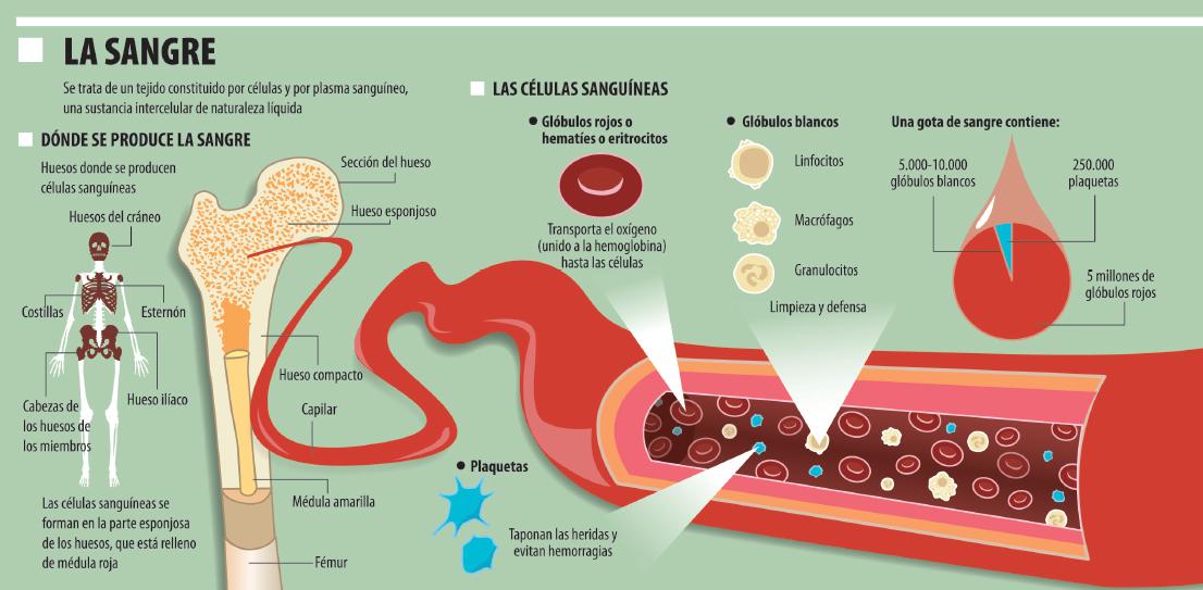 krev ve stolici parazit cancerul mamar si ovarian