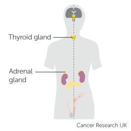 cancer affecting hormones