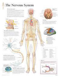 cancerul sistemului nervos central)