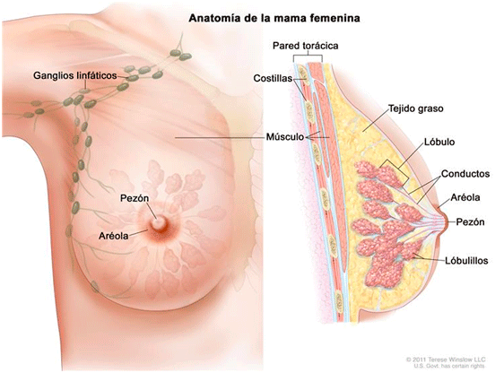 papiloma humano primera etapa hpv virus impfung jungen