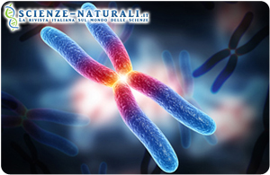 cancer pancreas genetico virus de papiloma humano resultados