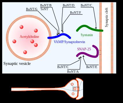 Toxina botulinică