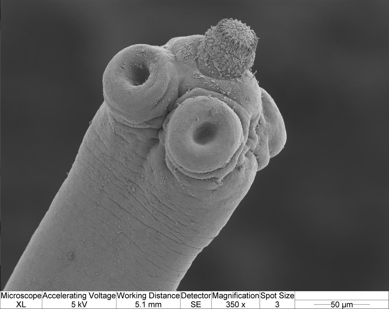 medicament papillomavirus humain