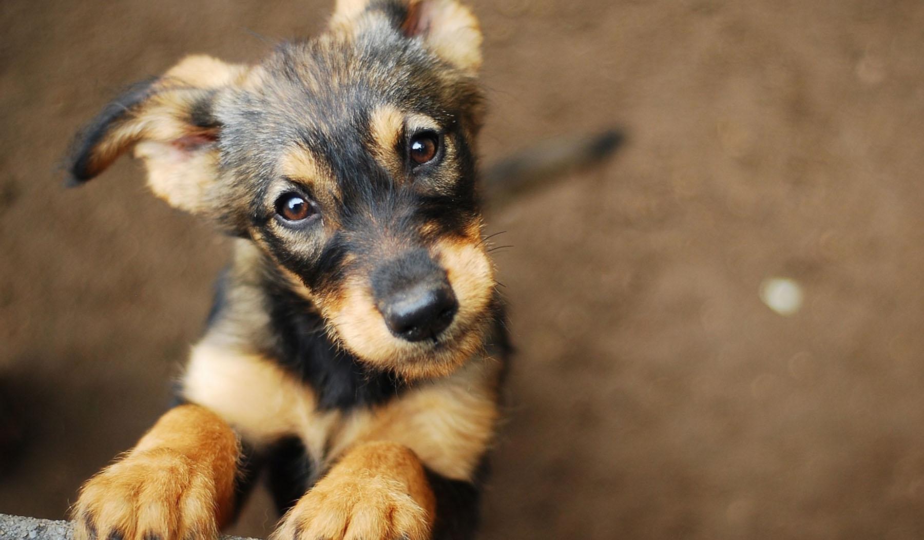 dermatite cane contagiosa