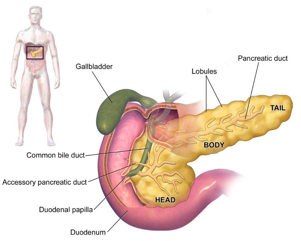 pancreatic cancer tests virusi fektion