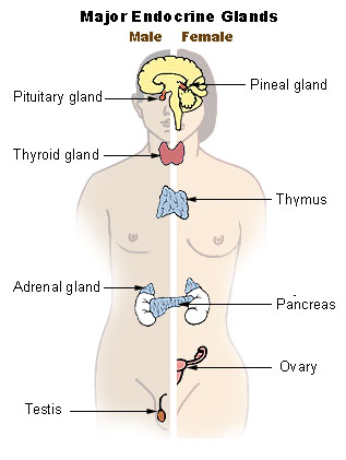 endocrine cancer what is it how often does hpv cause cancer in males