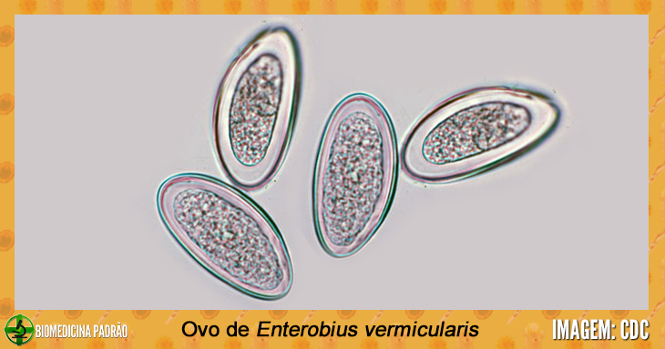 enterobius vermicularis es un geohelminth