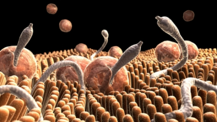 paraziti intestinali ascarizi