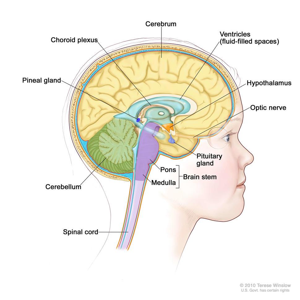 hpv brain tumor scabia la om