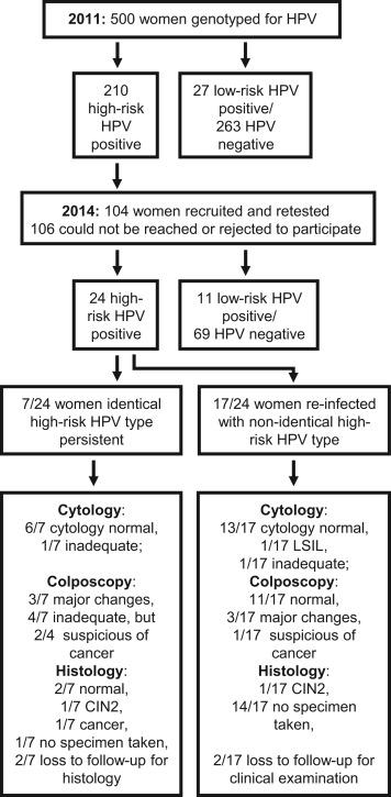 hpv high risk detected pap hpv papillomavirus shqip