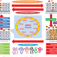 human papillomavirus in neonates nursing journal human papillomavirus