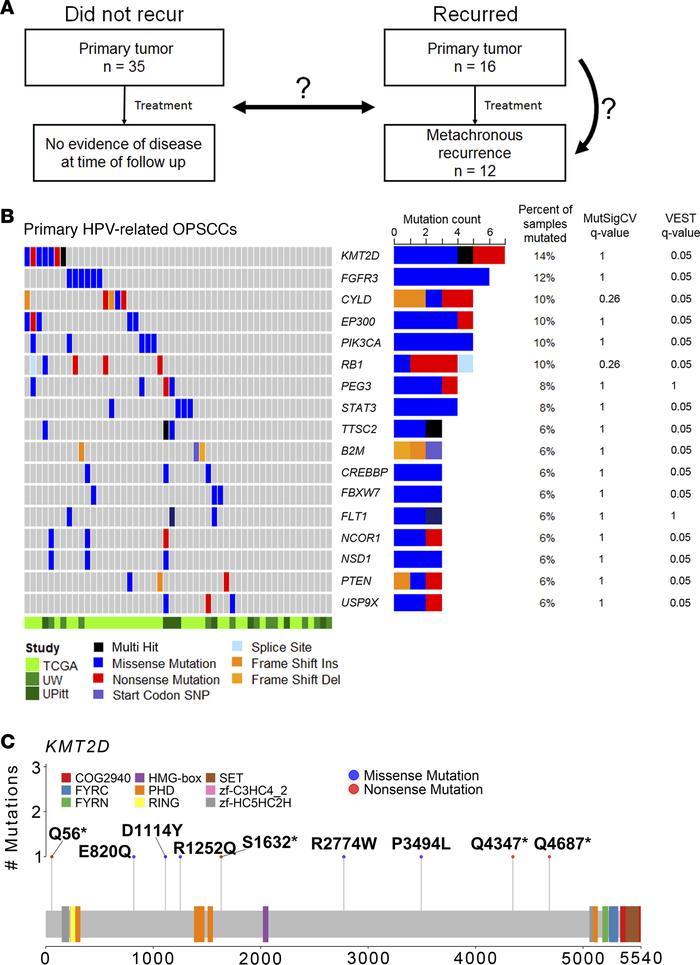 human papillomavirus related cancers