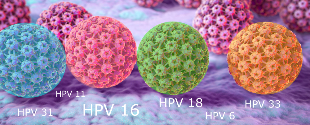 humani papiloma virus hpv infekcija hpv uomo papilloma