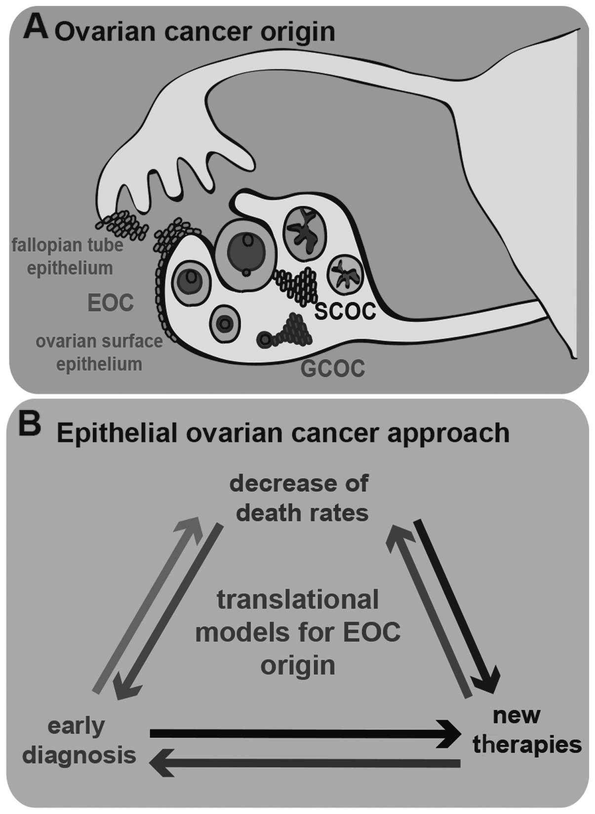 ovarian cancer epithelial origin
