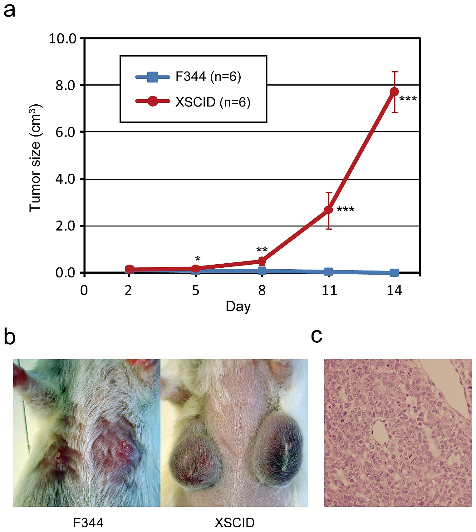 ovarian cancer xenotransplants caracteristicas del papiloma humano en hombres