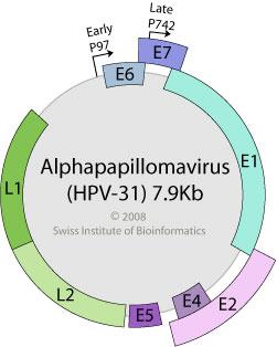 papillomavirus hpv 31 tratament pentru detoxifiere