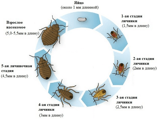 paraziti u stolici cena