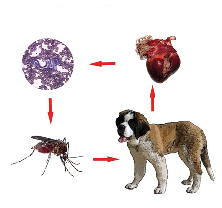 viermi filaria papilloma virus labbra sintomi