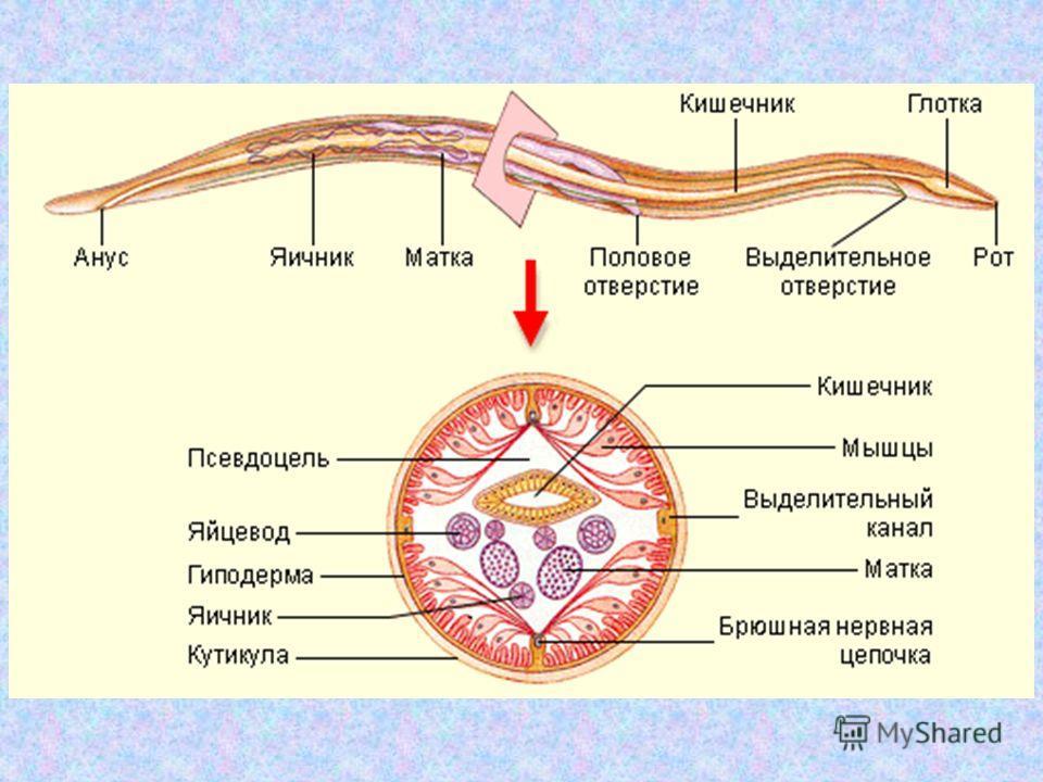 papillary thyroid cancer braf mutation