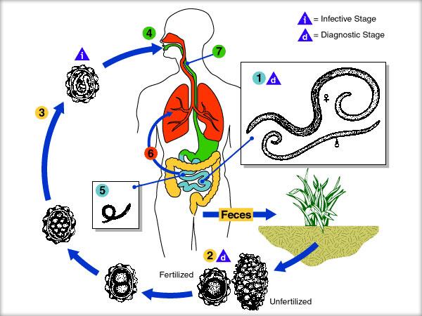 papillomavirus frottis normal centru de dezintoxicare bacau