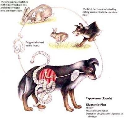 anemie v tehotenstvi